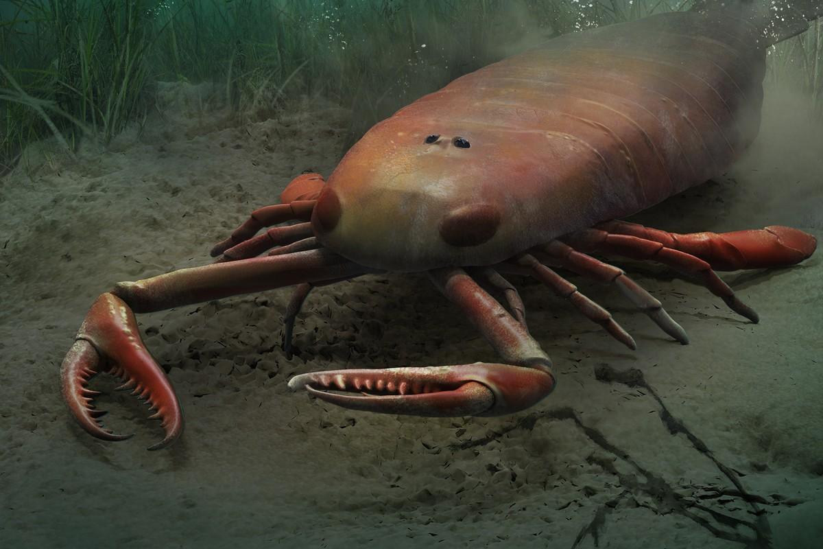 Впервые в Китае обнаружен ископаемый морской скорпион возрастом 420 миллионов лет